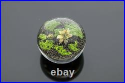 Paul Stankard Paperweight lampworked, glass signed